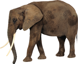 African Elephant PNG Photos PNG Clip art