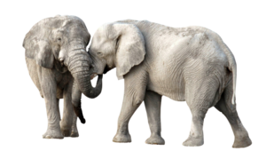 African Elephant PNG Transparent Image PNG icon