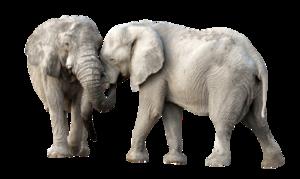 African Elephant PNG Transparent Image PNG Clip art