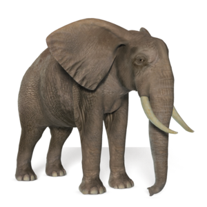 African Elephant Transparent Background PNG Clip art