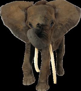 African Elephant Transparent PNG PNG Clip art