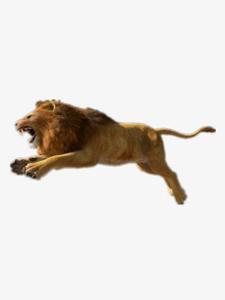 African Lion PNG Photos PNG Clip art