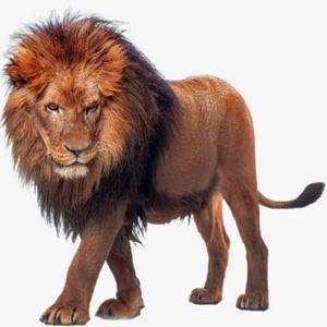 African Lion Transparent PNG PNG Clip art