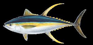 Ahi Tuna PNG Pic PNG Clip art