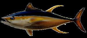 Ahi Tuna PNG Transparent Image PNG Clip art