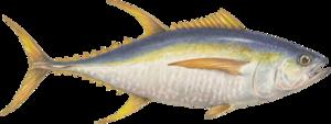 Ahi Tuna Transparent PNG PNG Clip art