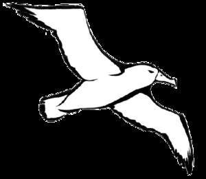 Albatross PNG File PNG Clip art