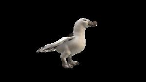 Albatross PNG HD PNG Clip art