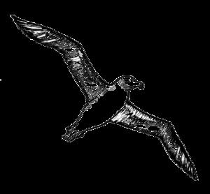 Albatross PNG Image PNG Clip art