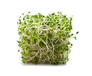 Alfalfa Transparent PNG PNG icon