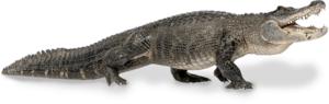 Alligator Download PNG Image PNG icon