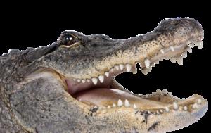 Alligator PNG Background Image PNG Clip art