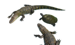 Alligator PNG Clipart PNG icon