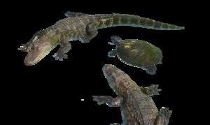 Alligator PNG Clipart PNG Clip art