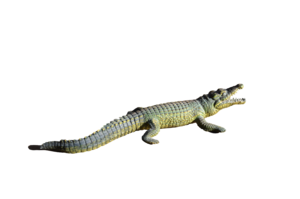 Alligator PNG File PNG clipart