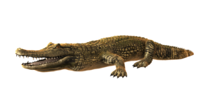 Alligator PNG Photo PNG icon