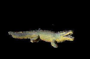 Alligator PNG Photos PNG Clip art