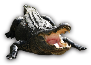 Alligator PNG Transparent HD Photo PNG icon
