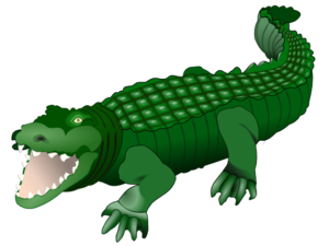 Alligator PNG Transparent Picture PNG Clip art