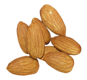 Almond PNG Free Download PNG Clip art