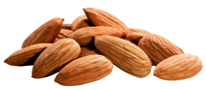 Almond PNG Image PNG Clip art