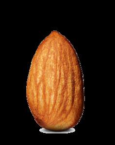 Almond PNG Photos PNG Clip art