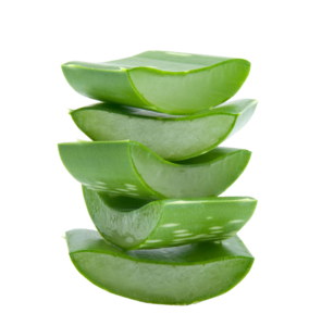 Aloe PNG File PNG Clip art