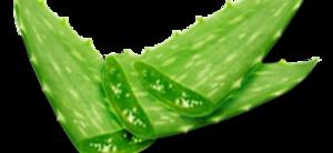 Aloe PNG HD PNG Clip art