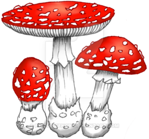 Amanita Muscaria PNG Image PNG Clip art