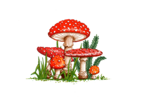 Amanita Muscaria PNG Picture PNG Clip art
