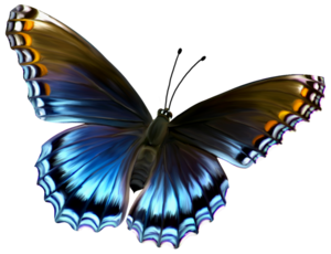 Amazing Butterfly PNG PNG Clip art