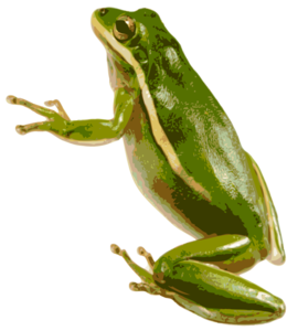 American Green Tree Frog PNG PNG image