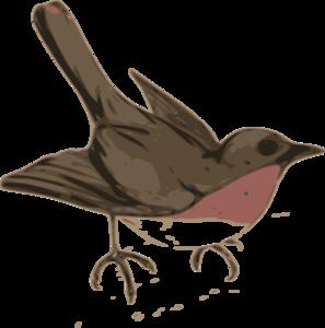 American Robin Transparent Background PNG Clip art