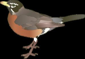 American Robin Transparent PNG PNG Clip art