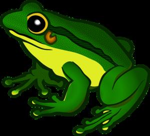 Amphibian PNG File PNG Clip art
