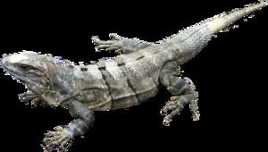 Amphibian PNG Image PNG Clip art