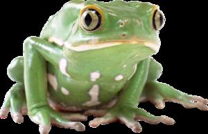 Amphibian Transparent Background PNG Clip art
