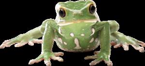 Amphibian Transparent PNG PNG Clip art