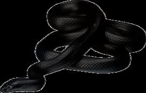 Anaconda PNG Photos PNG Clip art