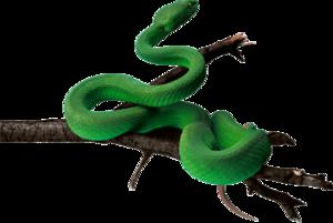 Anaconda PNG Pic PNG Clip art