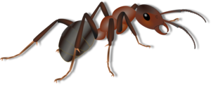 Ant PNG Photos PNG Clip art