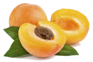 Apricot PNG File PNG Clip art