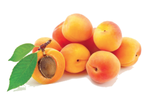 Apricot PNG Photos PNG Clip art