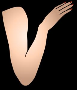 Arm PNG Image PNG Clip art