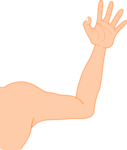 Arm PNG Photos PNG Clip art