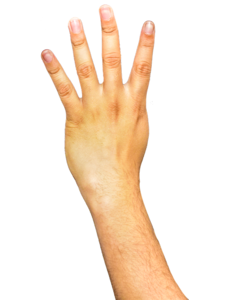 Arm Transparent Background PNG Clip art
