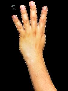 Arm Transparent Background PNG Clip art