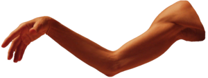 Arm Transparent PNG PNG Clip art