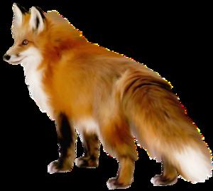 Artistic Fox PNG Clipart PNG Clip art