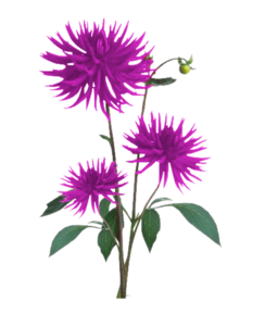Aster PNG Free Download PNG Clip art